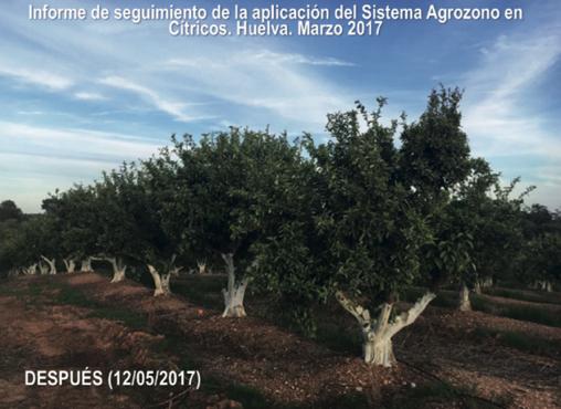Ozono para la agricultura