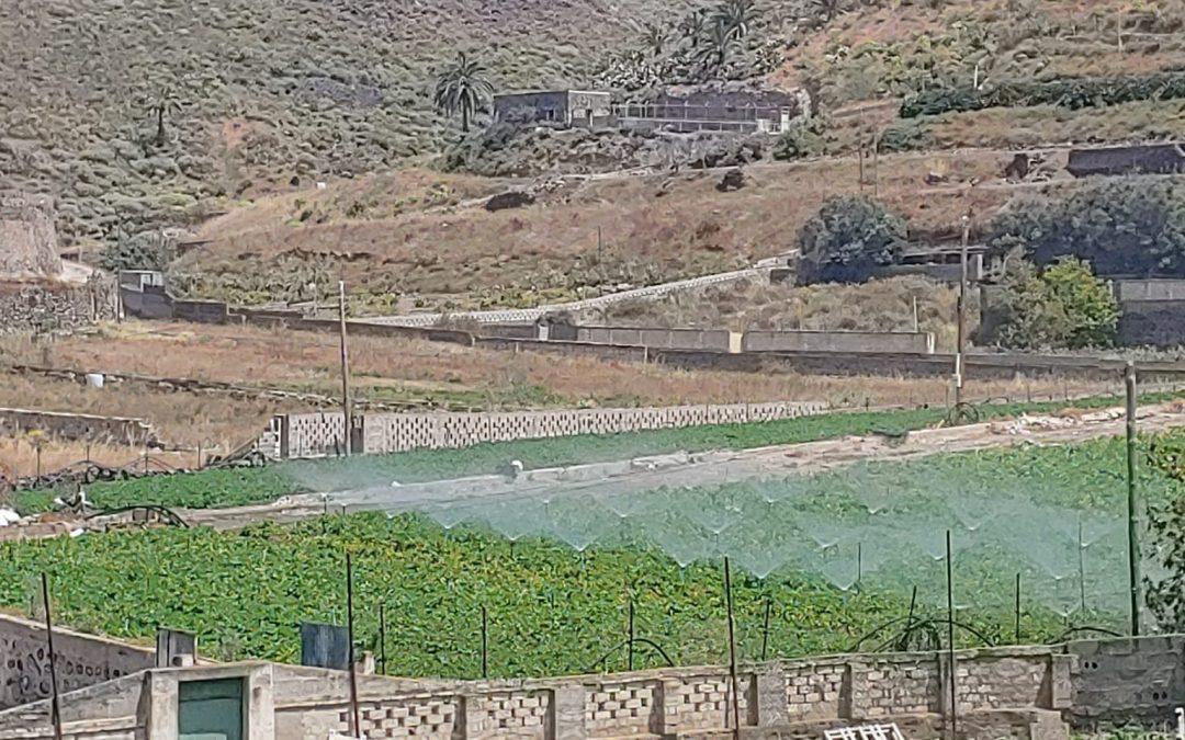 Regeneración de suelos con el SISTEMA AGROZONO en Canarias
